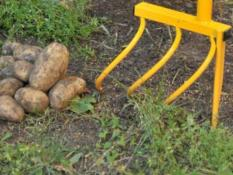 Kartupeļu uzracējs