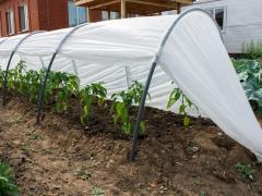 Frühbeet Fazenda 6