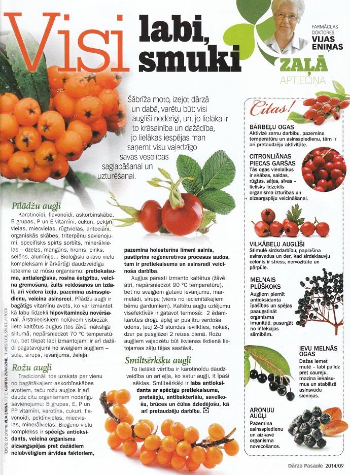 Augi veselībai - bārbeļu ogas, vilkābeļu augļi, smiltsērkšķu augļi utt.